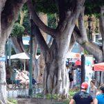 Un Omarello a Puerto de la Cruz (quarta parte)