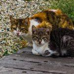 Ultimatum per colonie di gatti non censiti