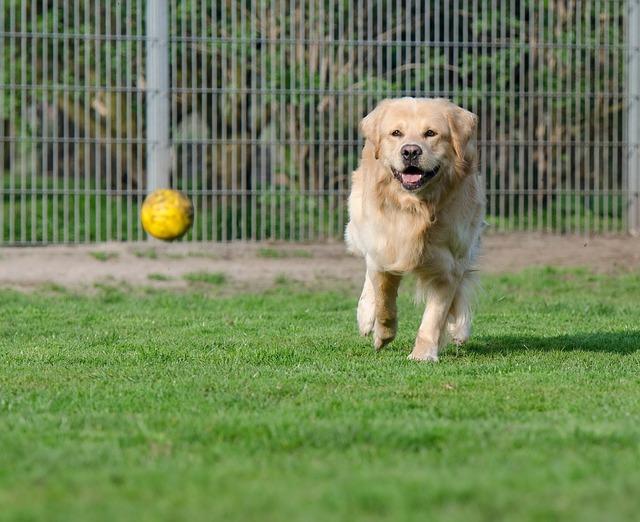 Giro di vite per chi abbandona escrementi dei propri cani