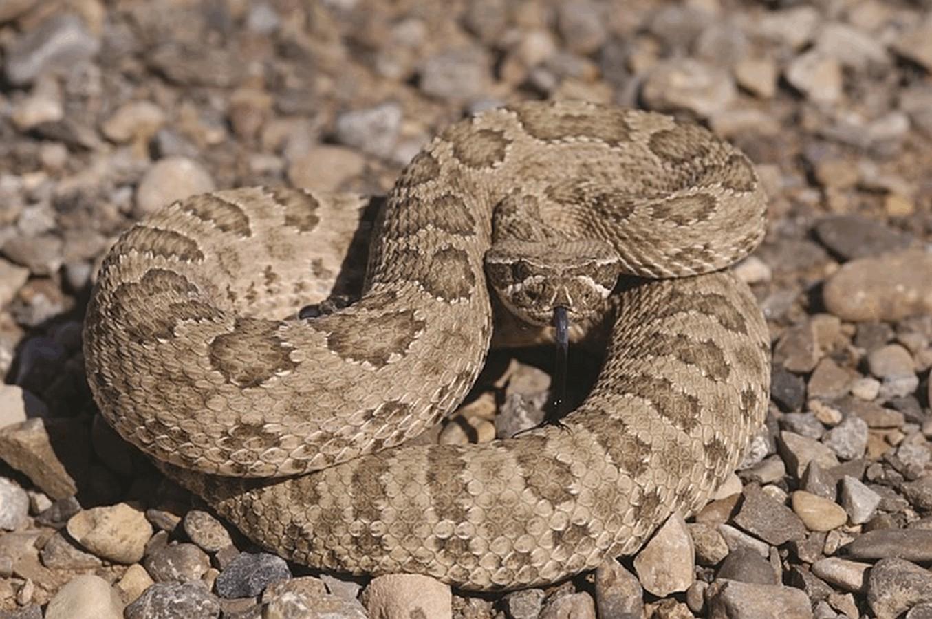 Il veleno di vespe scorpioni e serpenti contro il cancro for Veleno per serpenti