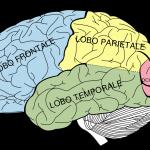 Cervello, siate sereni per mantenerlo sano
